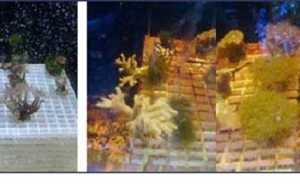 amazing coral growth at the World Aquarium