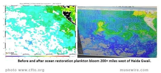 Plankton Bloom