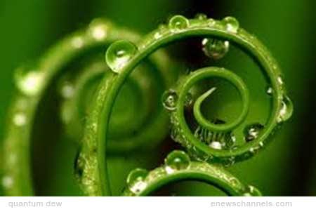 quantum dew
